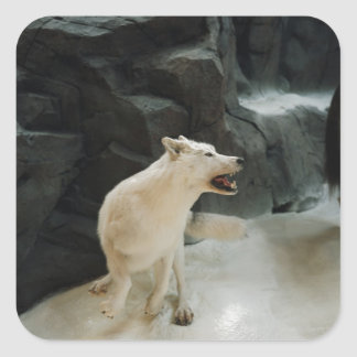 White Wolf Square Sticker