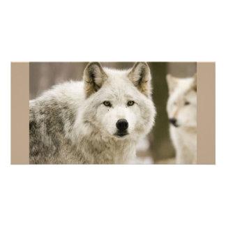 White Wolf Tarjeta Fotográfica