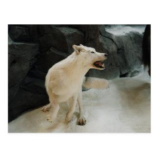 White Wolf Postal