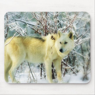 White wolf winter round mouse pad