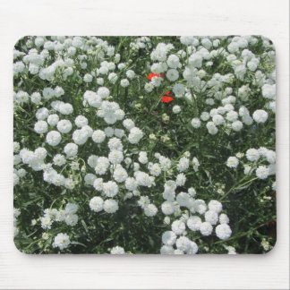 White Yarrow Ptarmica Maltese Cross Mouse Pad