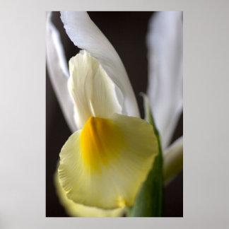 White & Yellow Iris Print