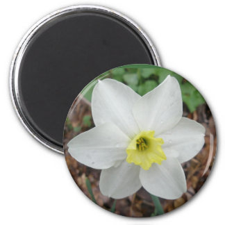 White & Yellow Narcissus Magnet