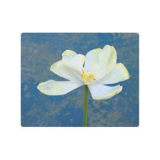 "White Yellow Tulip jjhelene 10""x8"" Metal Wall Art"