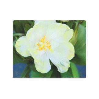 """White Yellow Tulips jjhelene 10""""x8"""" Metal Wall Art"""