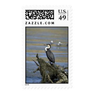 Whitebreasted Comorant Postage Stamp