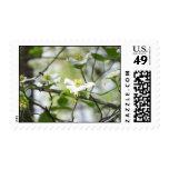 WhiteDogwoodE Stamps