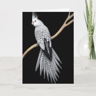 [Image: whitefaced_pearl_pied_cockatiel_card-p13...r3_400.jpg]