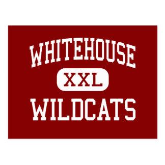 Whitehouse - gatos monteses - joven - Whitehouse Tarjetas Postales