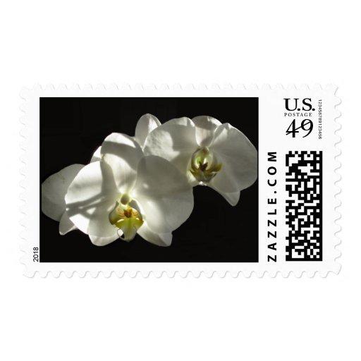 WhiteOrchids Postage Stamp