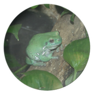 White's Tree Frog, Dumpy Frog Plates