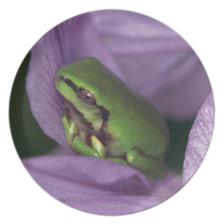 White's tree-frog plate