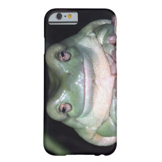 White's Treefrog, Litoria caerulea, Native to Barely There iPhone 6 Case