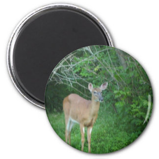 Whitetail 2 Inch Round Magnet