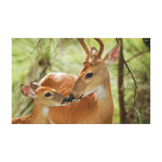Whitetail Buck And Fawn Bonding Gallery Wrap Canvas
