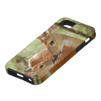 Whitetail Buck And Fawn Bonding iPhone SE/5/5s Case