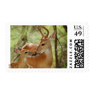 Whitetail Buck And Fawn Bonding Stamp