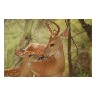 Whitetail Buck And Fawn Bonding Wood Canvas