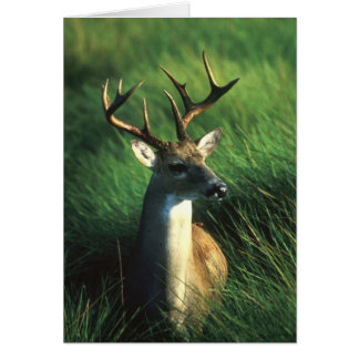 WHITETAIL BUCK CARD