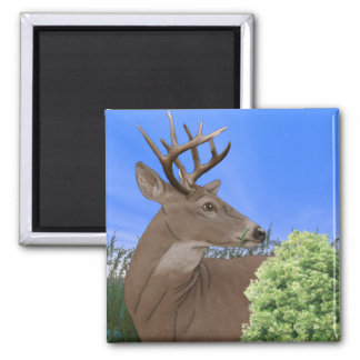 Whitetail Buck Deer 2 Inch Square Magnet