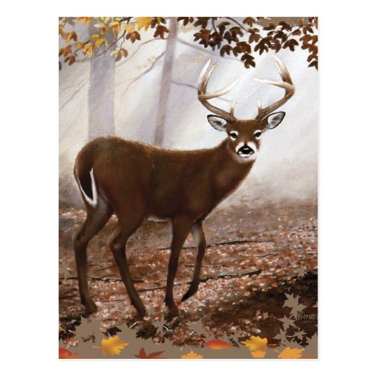 WhiteTail Buck Fall Leaves Postcard
