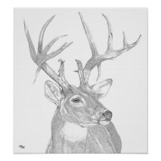 Whitetail buck head poster