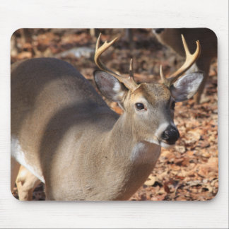 Whitetail Buck Mouse Pad