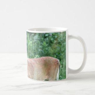 Whitetail Buck Mugs