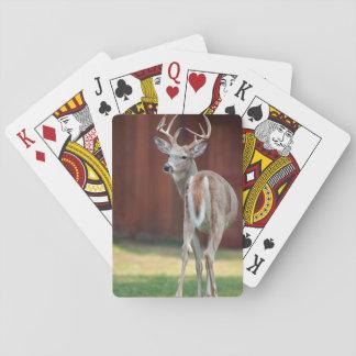 Whitetail Buck portrait, Missoula, Montana Playing Cards