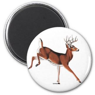 Whitetail Deer 2 Inch Round Magnet