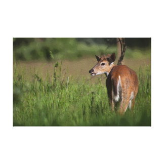 Whitetail Deer Art Wrapped Canvas Print