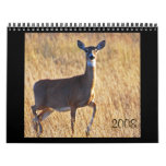 Whitetail Deer at the Dune's! Calendars