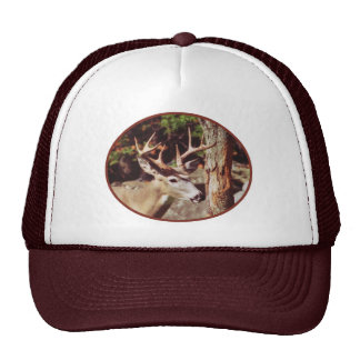 Whitetail Deer - Buck Hat