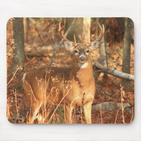 Whitetail Deer Buck Mouse Pad
