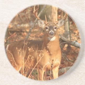Whitetail Deer Buck Sandstone Coaster