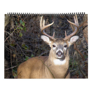 Whitetail Deer Bucks Calendar