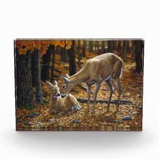 Whitetail Deer Doe and Fawn Autumn Award