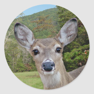 Whitetail Deer (Doe) Sticker