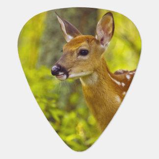 Whitetail deer fawn in Whitefish, Montana, USA Guitar Pick