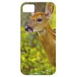 Whitetail deer fawn in Whitefish, Montana, USA iPhone SE/5/5s Case
