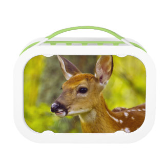 Whitetail deer fawn in Whitefish, Montana, USA Lunch Box