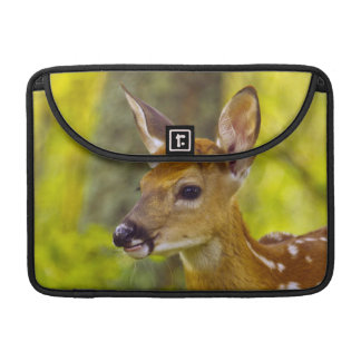 Whitetail deer fawn in Whitefish, Montana, USA MacBook Pro Sleeve