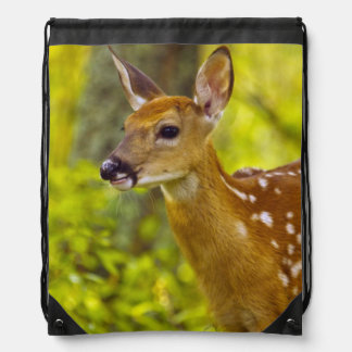 Whitetail deer fawn in Whitefish, Montana, USA Cinch Bags