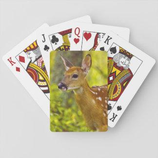 Whitetail deer fawn in Whitefish, Montana, USA Poker Deck