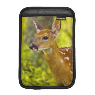 Whitetail deer fawn in Whitefish, Montana, USA Sleeve For iPad Mini
