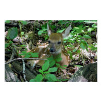 Whitetail Deer Fawn in Woods Poster