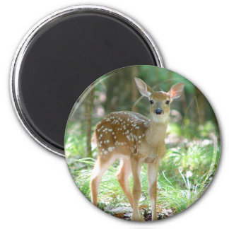 Whitetail Deer Fawn Magnet