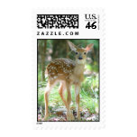 Whitetail Deer Fawn Postage