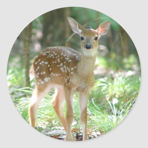 Whitetail Deer Fawn Sticker