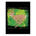 Whitetail Deer Grunge Postcard